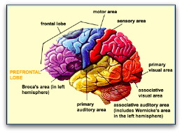 learn the basics of brain structure, Sphenoid